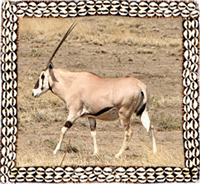 Ethiopian Grants Gazelle